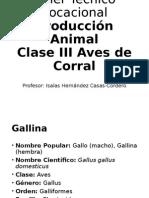Taller Técnico Vocacional - Producción Animal - Clase III Aves de Corral