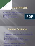 ANEXOS CUTANEOS