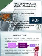 Bacterias Esporuladas Anaerobias, (Clostridium)