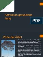 Ciruelillo-Astronium Graveolens Jacq