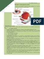 Anatomía y Fisiología de La Vista