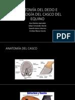 Anatomia e Histologia Del Casco