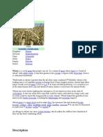 Grain Information