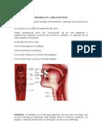Órganos Del Tubo Digestivo