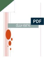 Aula - Celula Vegetal
