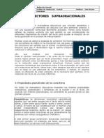 Conectores-.doc