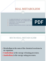 Lab 4 Microbial Metabolism