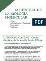 Dogma de La Biología Molecular