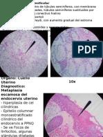 Patologia Practica Primer Segmento