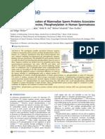 Evolutionary Conservation of Mammalian Sperm Proteins Associates