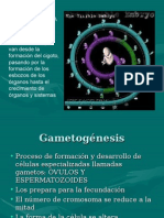 Copia-de-Gametogénesis.ppt