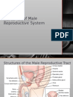 Male Reproductive Disorders St