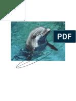 paola y delfin