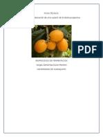Proceso de Elaboración de vino a partir de Eriobotrya japonica
