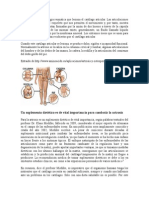 Los Aminoacidos y Su Importancia en El Tratamiento de La Artrosis y La Osteoporosis