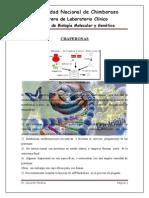 Biologia Molecular Chaperonas
