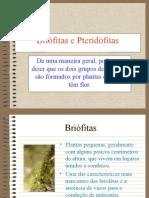 briofitas-e-pte-1215474112310996-8