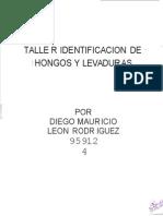 Microbiologia Hongos y Levaduras