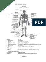 Istilah Terminologi Anatomi Fisiologi Manusia