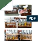 laporan biokimia Isolasi Dna