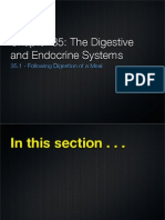 The Digestive and Endocrine Systems Slides