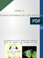Entomología - Anatomía Externa de Insectos
