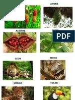 Animales Plantas Frutas Del Peru