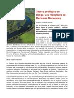 Tesoro Ecológico en Riesgo. Los Manglares de Marismas Nacionales