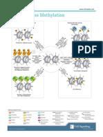 Histone_Methylation