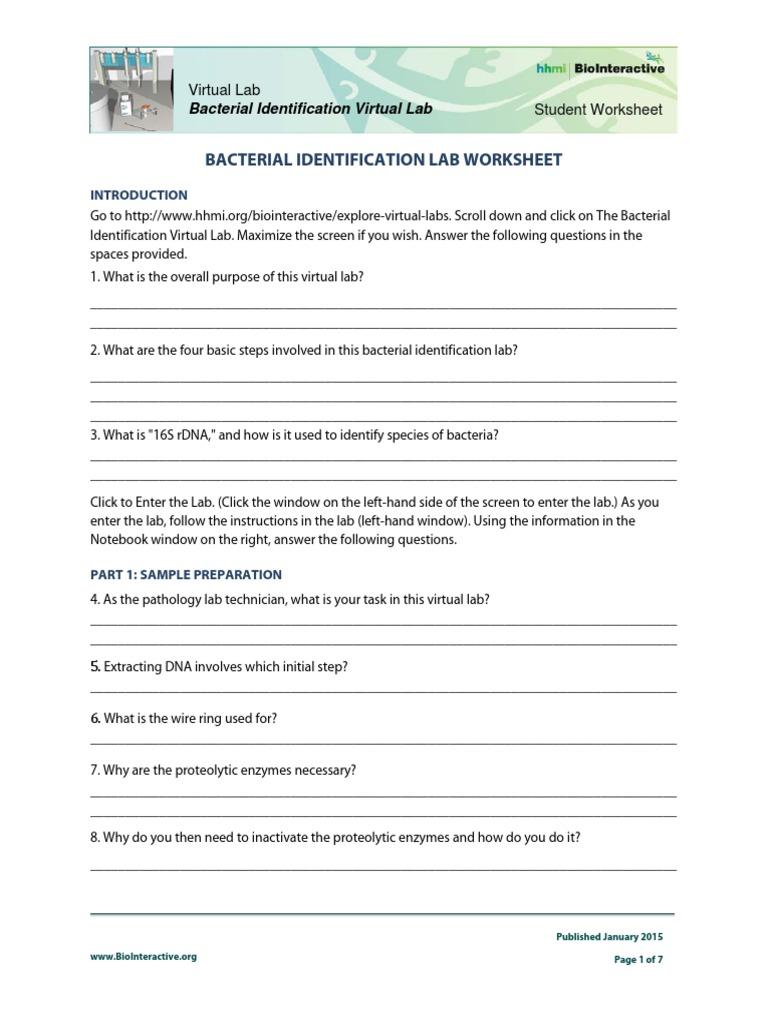 Bacterial Identification Lab Worksheet Student – Gel Electrophoresis Virtual Lab Worksheet