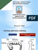 desarrollo de tronco encefalico