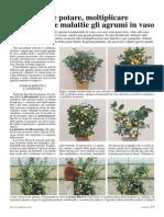 [AGR] Agrumi Come Potare Moltiplicare E Curare Dalle Malattie Gli Agrumi in Vaso (Vita in Campagna)
