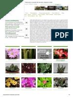 Piante Grasse e Succulente_ Foto, Descrizioni, Coltivazione e Vendita