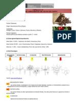Cultivo de Cafeto.pdf