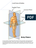 Planes of Movement and Terms of Position