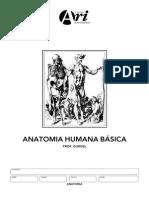 Manual Basico de Anatomia