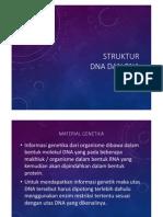 struktur-dna-dan-rna.pdf