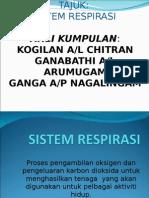Sistem Respirasi 3