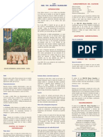 ajo blanco huaralino.pdf