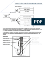 Morfología interna de los Conductos Radiculares