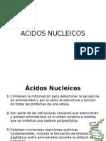 Clase 4_Ac. Nucleicos