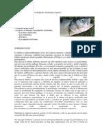 Nudos de pesca (Lubina)