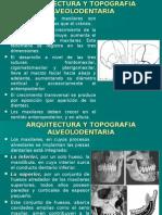 arquitectura y Topografia Alveolodentaria