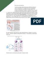 Alteraciones en el número de cromosomas.docx