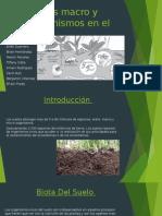 Papel de Los Macro y Micro Organismos En