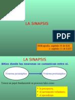 Presentacion de sinapsis.ppt