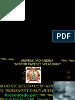 ECOLOGIA DIAPOSITIVAS.pptx