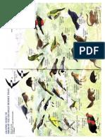 Kumpulan Jenis Burung