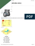 Wikipedia - Posterior Interventricular Artery (CHECKED)
