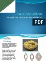 Excretory.pdf